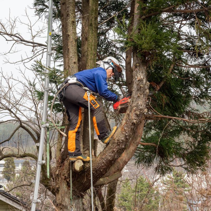 ご自宅の庭木伐採1